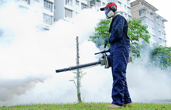 fumigacion control de plagas en sevilla